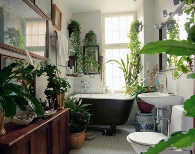 bathroom-plants-