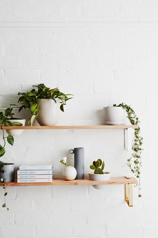 Ivy plant.jpg